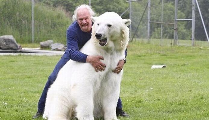 в какой зоне белый медведь