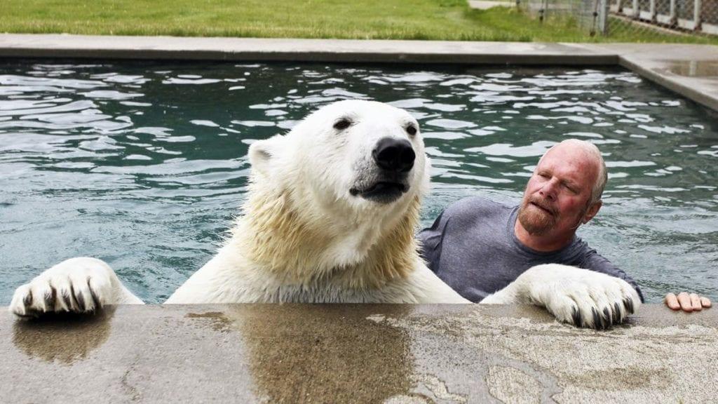 сколько живут белые медведи