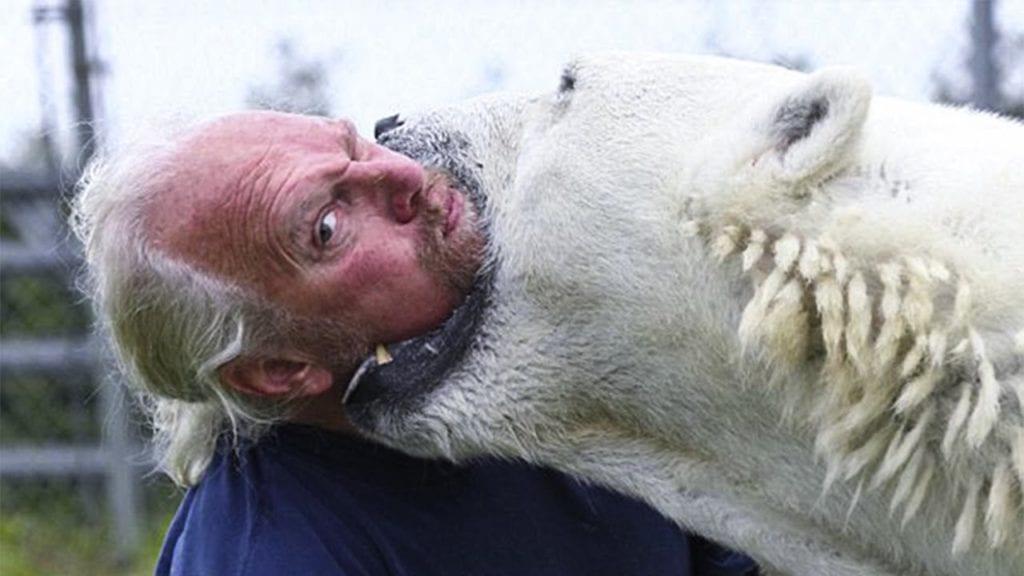 белый медведь в природе