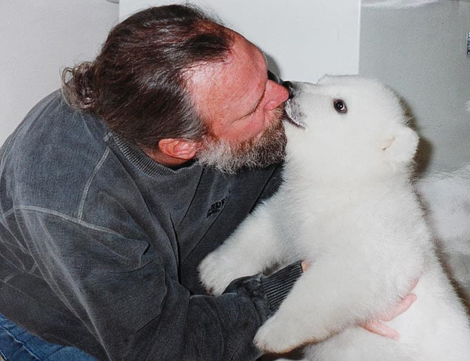 белые медведи на севере