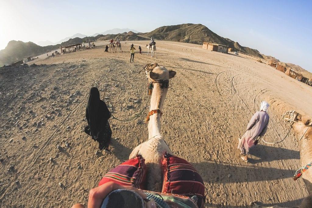 Обучение верблюда